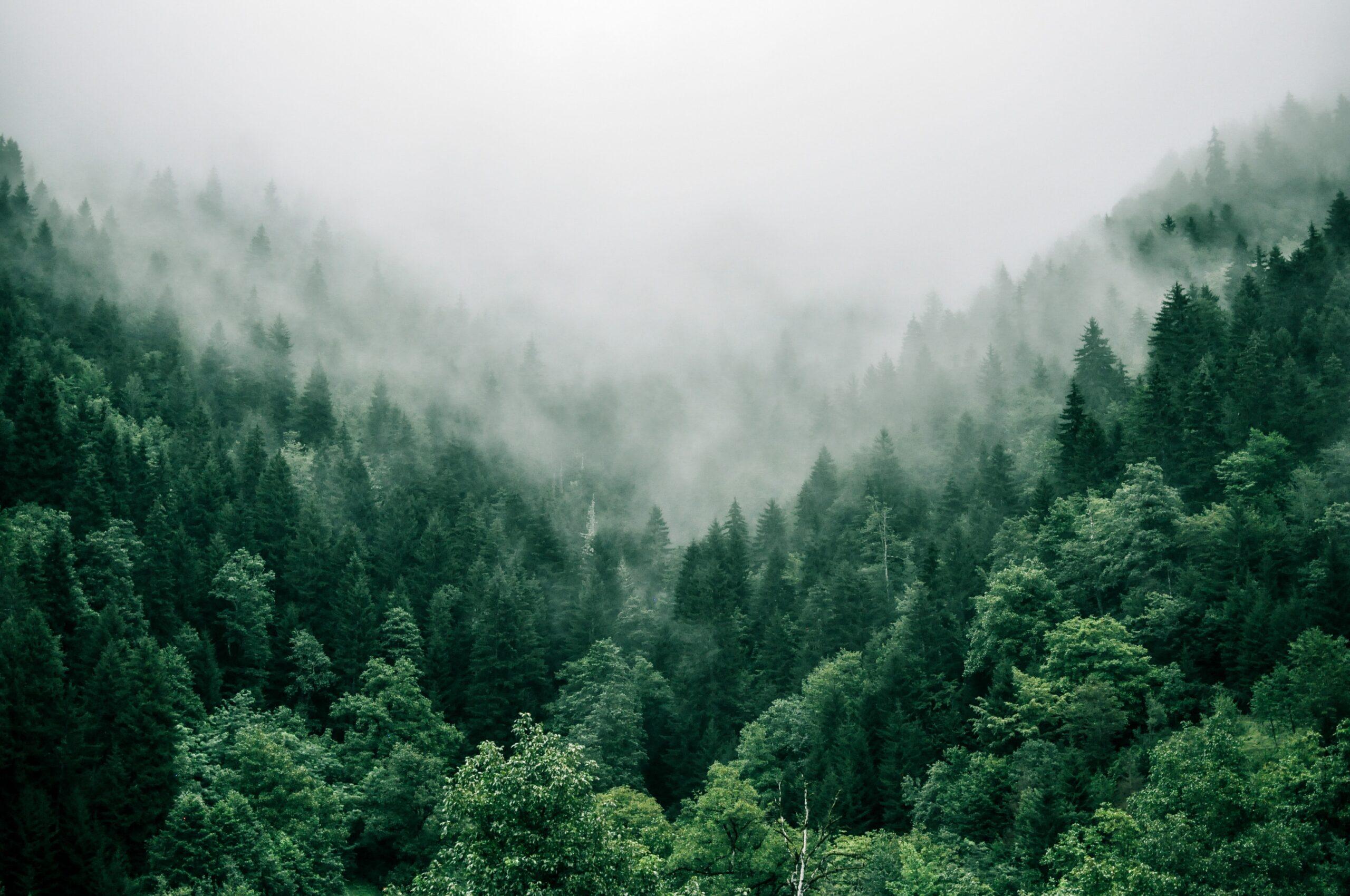 Mit einem Klick Gutes tun – wie ihr von zuhause aus Bäume pflanzen könnt